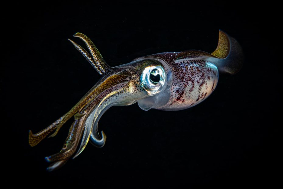 Squid by Brandon Hannan 2