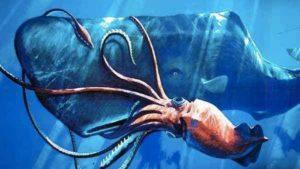 El calamar colosal (Mesonychoteuthis hamiltoni)